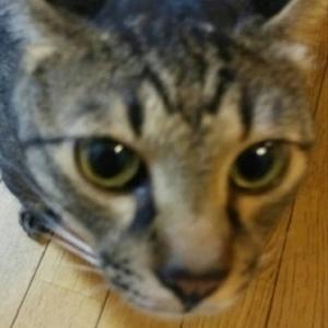 マイホーム購入!!~~我が家のマンションの見学の日ですよ&2匹の猫たち~~