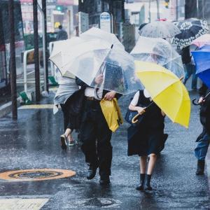 「超大型台風でも出社、これ当たり前」クールな日本に違和感。幼少期の教育が人格と選択肢の違いを創る。