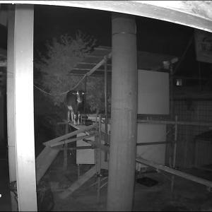 ヤギ深夜カメラ