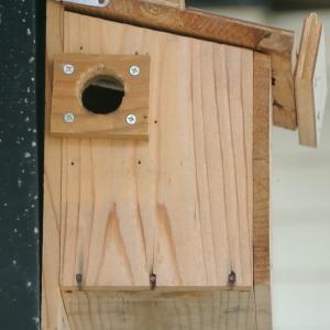 玄関カーポートの四十雀