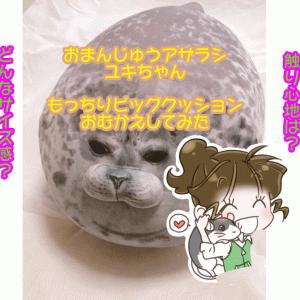 フェリシモおまんじゅうアザラシユキちゃん もっちりビッグクッションレビュー