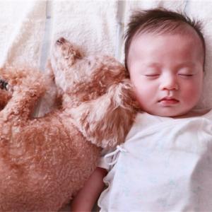 動物(犬)アレルギー 息子の場合 症状と対処法