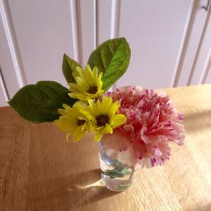 お部屋に彩り  切り花を長持ちさせるコツ
