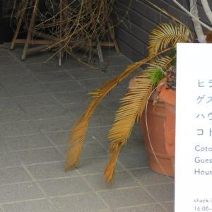 平戸で野菜の生産農家を訪問しました。