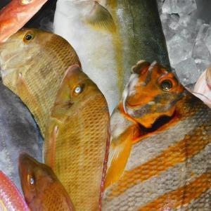 平戸の魚~料理編