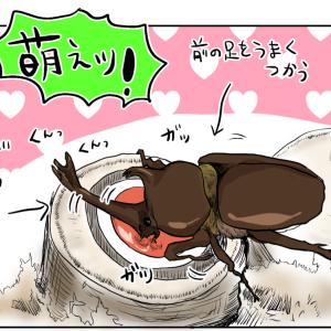 カブトムシを飼う