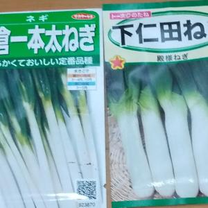 ネギの種まき~発芽