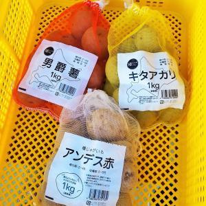 ジャガイモの種イモ準備、青梗菜のオイスター炒め!