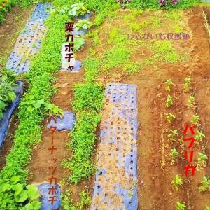 6月の菜園!土用の土いじり!