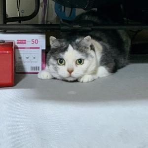 猫じゃらし 【1643】