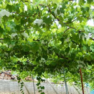 勝沼ワイナリー巡り(その2)原茂ワイン