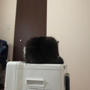 箱なの?猫なの?