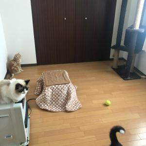 寝室の模様替え(大掃除)