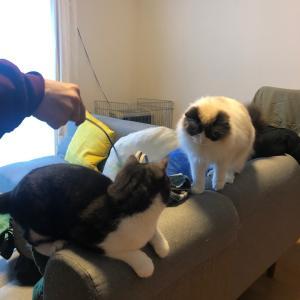 猫達と友人&財布交換の儀