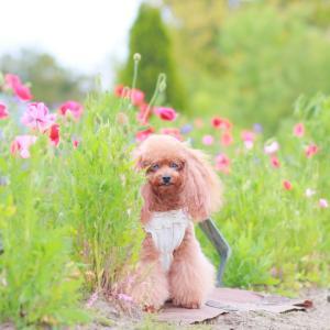 お花の間をお散歩♪