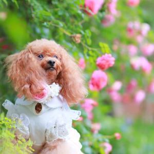 昨日は薔薇のお庭へ行ってきたよ♪