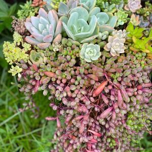 雨ざらし寄せ植えを保護。勝手にアロマティカスチャレンジ2