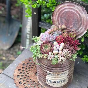 寄せ植えbefore→after&旦那、葉挿しに興味を持つ。