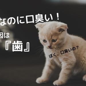 子猫の口臭いのは歯が原因!?考えられる病気や対処法をご紹介!