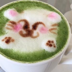 【体験談あり】オススメの猫カフェin長野!