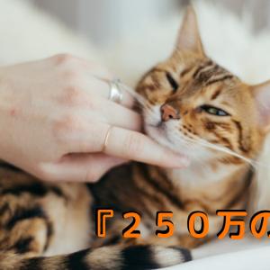豹みたいな猫「ベンガル」の性格や値段はいくらなのか?