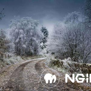 MAMP 環境で WEB サーバを Nginx に変更するなら、413 エラーを予防しておこう!