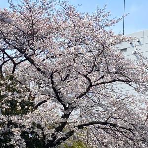 桜も三月も終わります