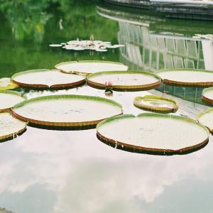 京都府立植物園の商業撮影有料化について