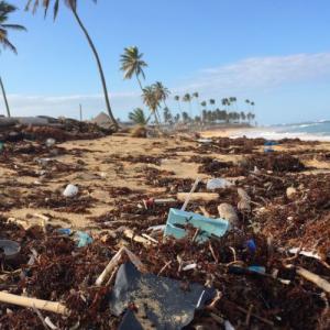 深海の環境問題に人間が与えている影響【ごみ・プラスチック】