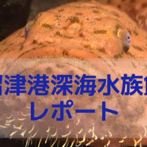 沼津港深海水族館で撮影した画像と動画