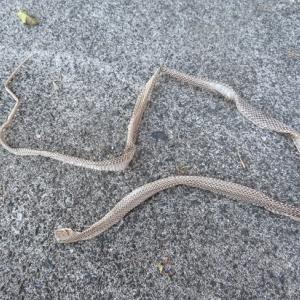 ☆蛇の抜け殻~~~♪
