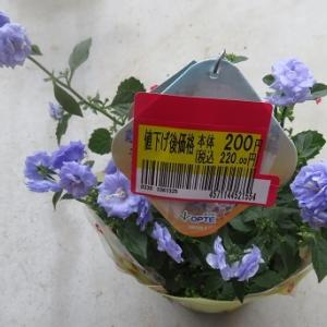 ☆買ったお花~~~♪