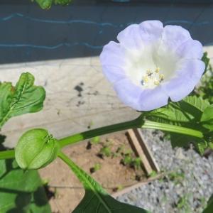 ☆この花は何?