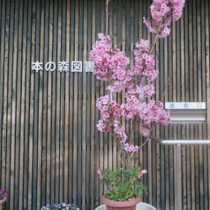 ☆図書館のお花たち~~~♪