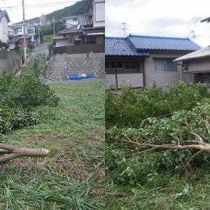 庭木の処分