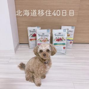北海道移住40日目
