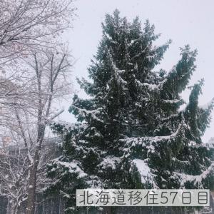 北海道移住57日目