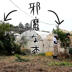 農業 修行編3「草刈り終了」
