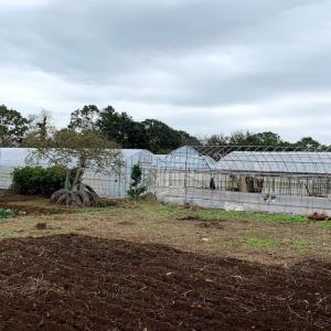 農業 修行編7「台風の後」