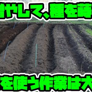 農業 修行編9「畝を増やす」