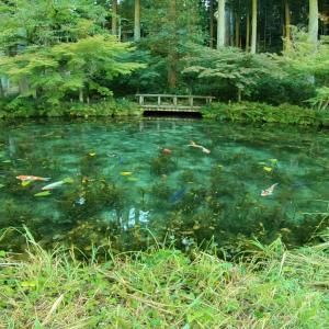 モネの池にツーリングに行った感想(周辺・駐車場・見頃)