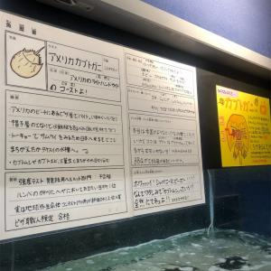 竹島水族館へ行こう!