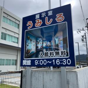焼津市のうみしるへGo!!