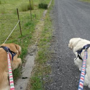 今日の散歩は・・・( ;∀;)