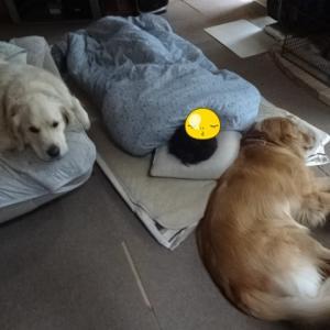ワンズの寝姿( *´艸`)