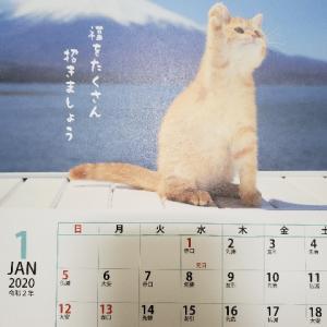 2020我が家のカレンダーが猫祭り