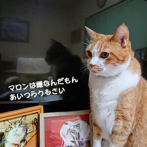 吠える猫、吠えない猫