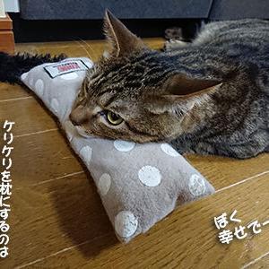 猫に祈りは届かない