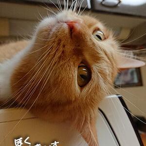 猫が開催する大運動会