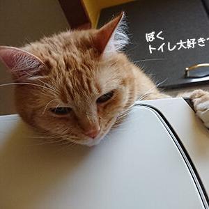 トイレが大好きな猫